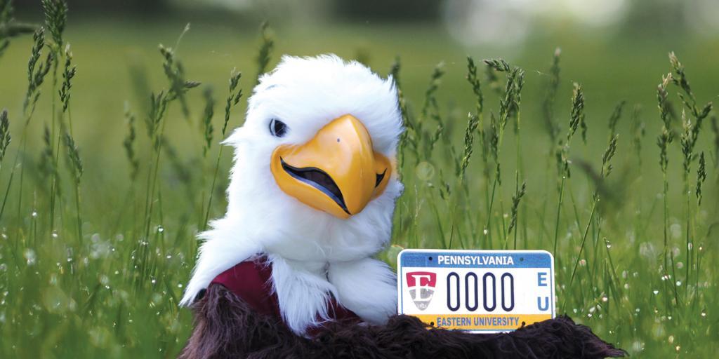 Philadelphia Eagles Pink Glitter License Plate Frame With White Lettering