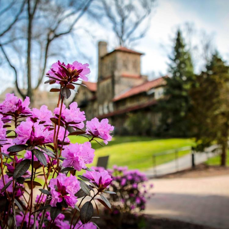 Campus Purple Flowers